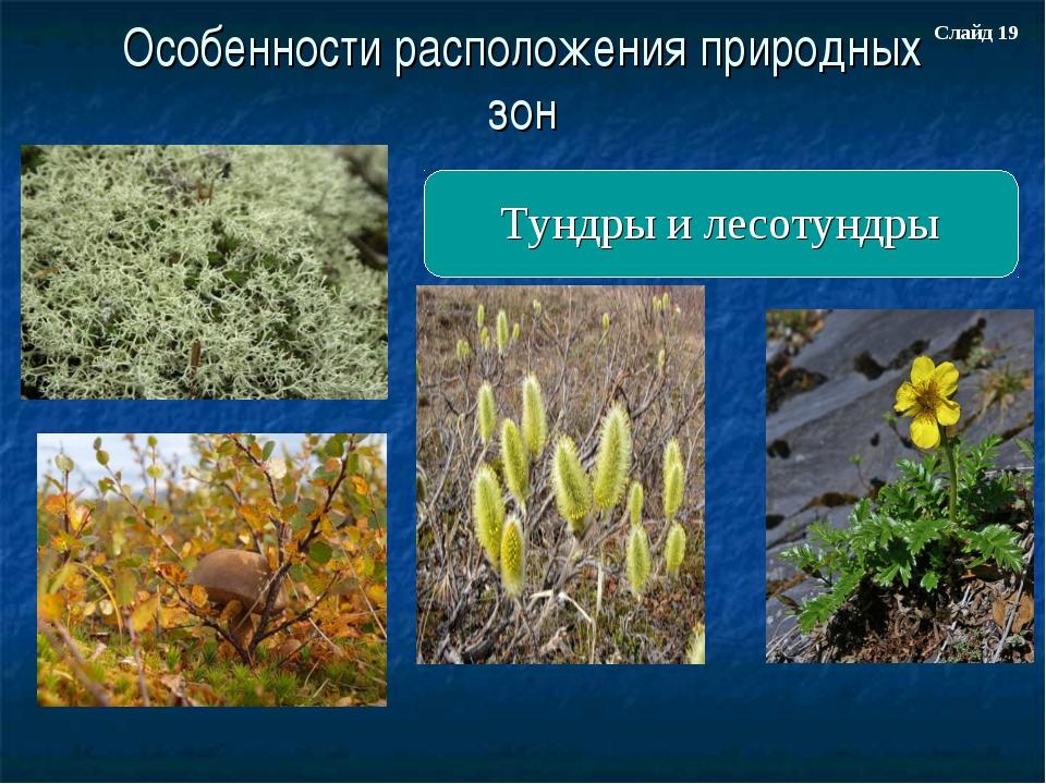 Особенности расположения природных зон Тундры и лесотундры Слайд 19