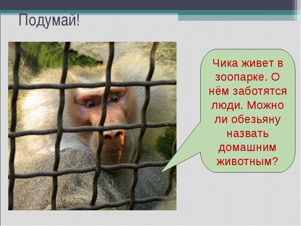Подумай! Чика живет в зоопарке. О нём заботятся люди. Можно ли обезьяну назва...