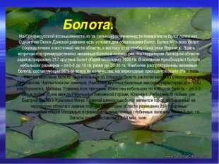 Болота. На Среднерусской возвышенности из-за сильной расчлененности поверхно