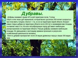 Дубравы. Дубравы занимают свыше 40% всей территории лесов. Господ ствует в э