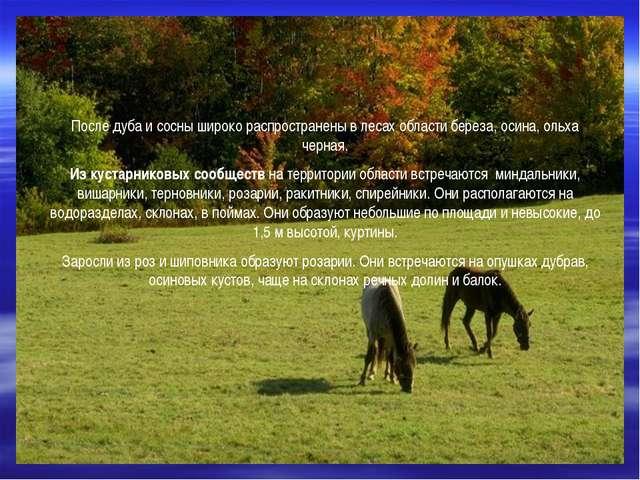 После дуба и сосны широко распространены в лесах области береза, осина, ольх...