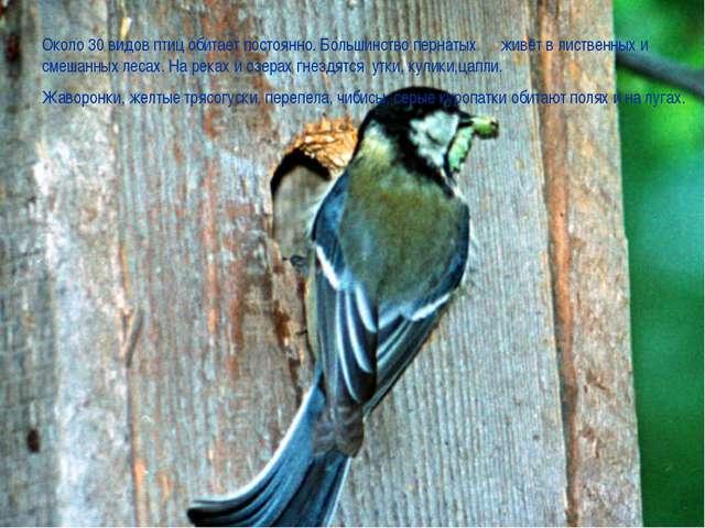 Около 30 видов птиц обитает постоянно. Большинство пернатых живёт в лиственн...