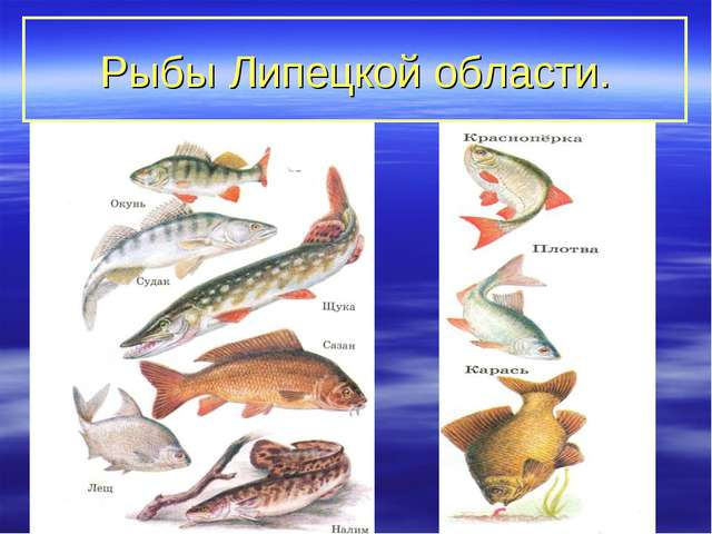 Рыбы Липецкой области.