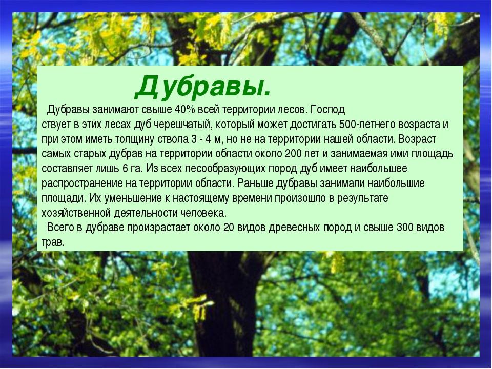 Дубравы. Дубравы занимают свыше 40% всей территории лесов. Господ ствует в э...