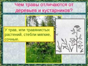 Чем травы отличаются от деревьев и кустарников? У трав, или травянистых расте