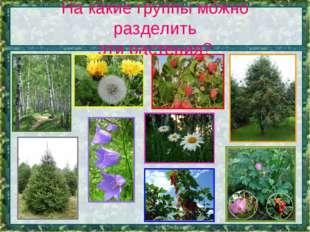 На какие группы можно разделить эти растения?