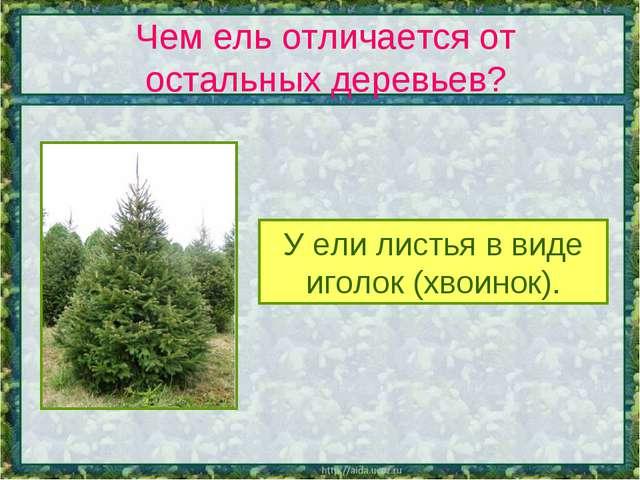 Чем ель отличается от остальных деревьев? У ели листья в виде иголок (хвоинок).