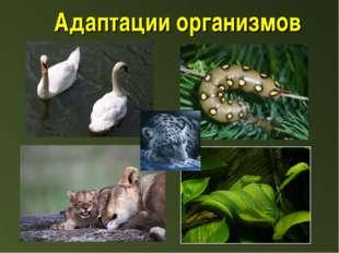Адаптации организмов