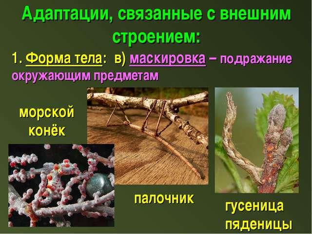 Адаптации, связанные с внешним строением: 1. Форма тела: в) маскировка – подр...