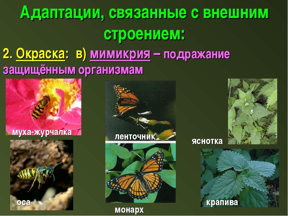 Адаптации, связанные с внешним строением: 2. Окраска: в) мимикрия – подражани...