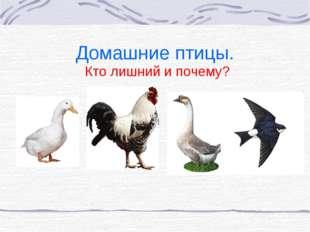 Домашние птицы. Кто лишний и почему?