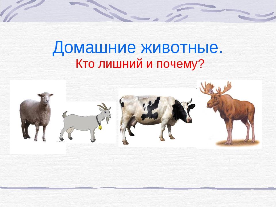 Домашние животные. Кто лишний и почему?
