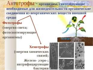 Автотрофы - организмы, синтезирующие необходимые для жизнедеятельности органи