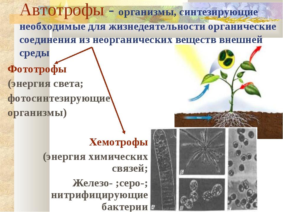 Автотрофы - организмы, синтезирующие необходимые для жизнедеятельности органи...