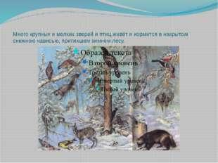 Много крупных и мелких зверей и птиц живёт и кормится в накрытом снежною нави