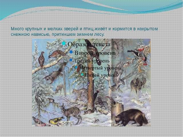 Много крупных и мелких зверей и птиц живёт и кормится в накрытом снежною нави...