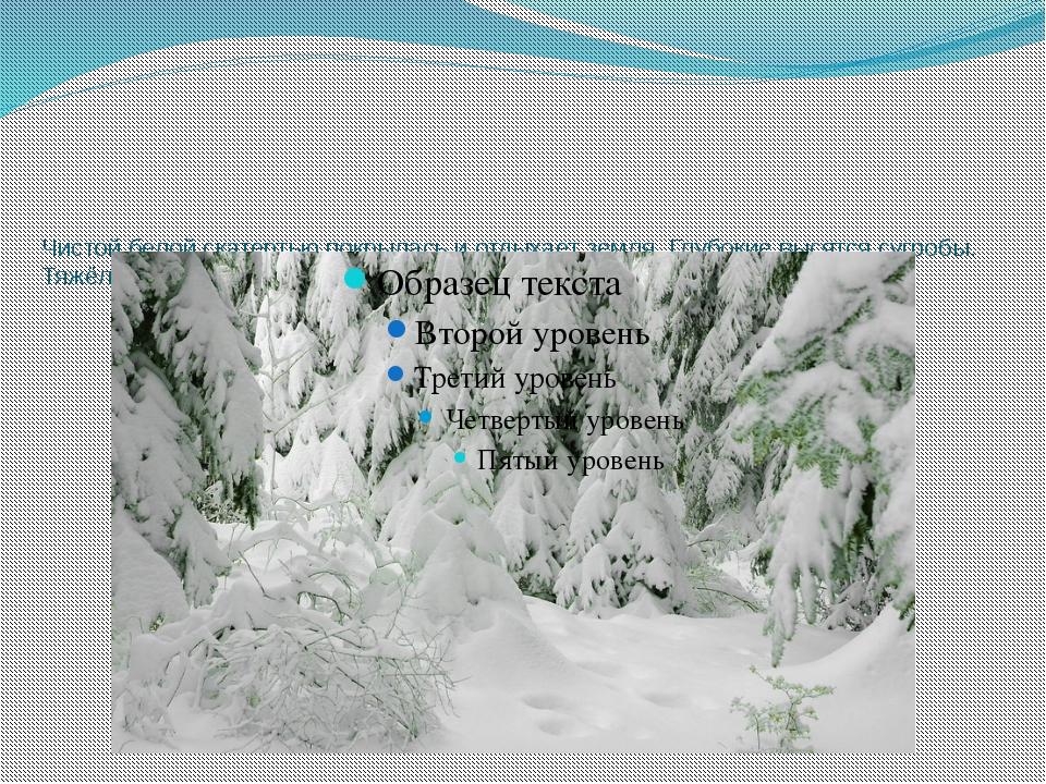 Чистой белой скатертью покрылась и отдыхает земля. Глубокие высятся сугробы....