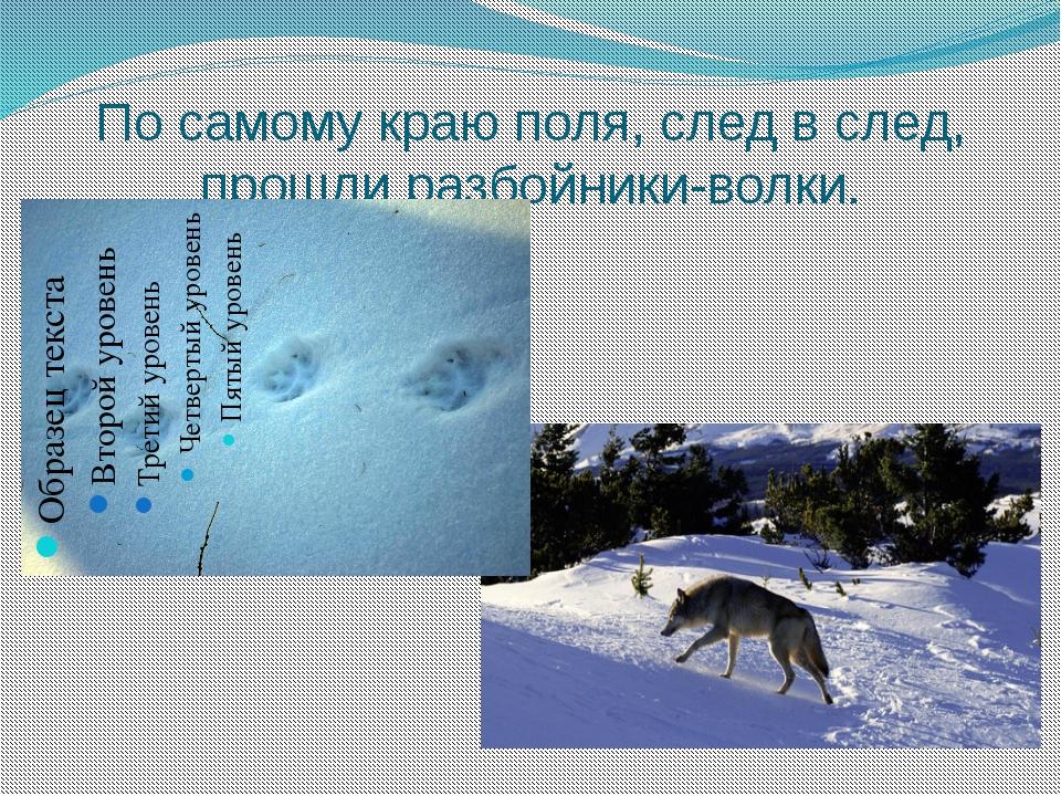 По самому краю поля, след в след, прошли разбойники-волки.