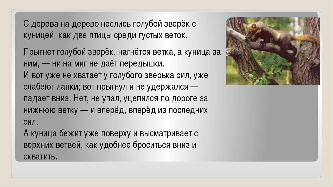 С дерева на дерево неслись голубой зверёк с куницей, как две птицы среди густ...