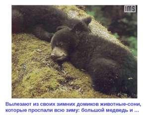 Вылезают из своих зимних домиков животные-сони, которые проспали всю зиму: бо