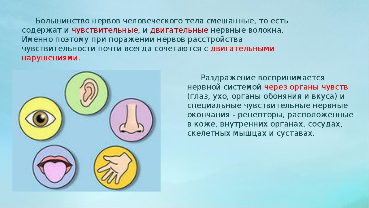 Большинство нервов человеческого тела смешанные, то есть содержат и чувствит...