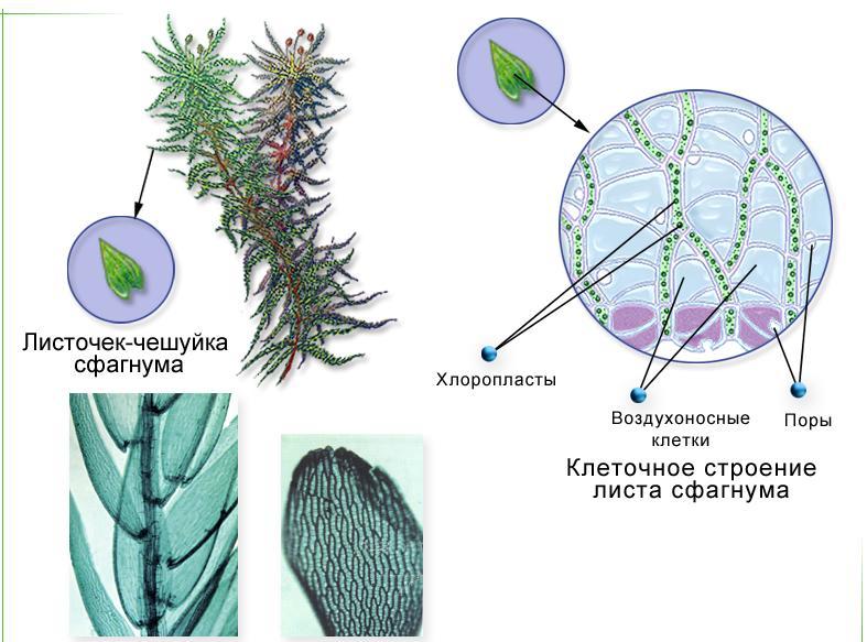 какие организмы называют паразитами биология 5 класс