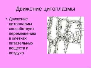 Движение цитоплазмы Движение цитоплазмы способствует перемещению в клетках пи