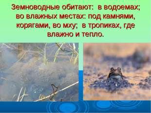 Земноводные обитают: в водоемах; во влажных местах: под камнями, корягами, во
