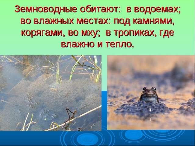Земноводные обитают: в водоемах; во влажных местах: под камнями, корягами, во...