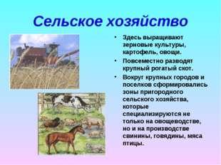 Сельское хозяйство Здесь выращивают зерновые культуры, картофель, овощи. Повс