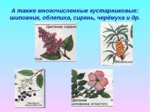 А также многочисленные кустарниковые: шиповник, облепиха, сирень, черёмуха и