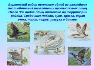 Варненский район является одной из важнейших мест обитания перелётных промысл