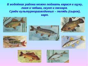 В водоёмах района можно поймать карася и щуку, линя и чебака, окуня и пескаря