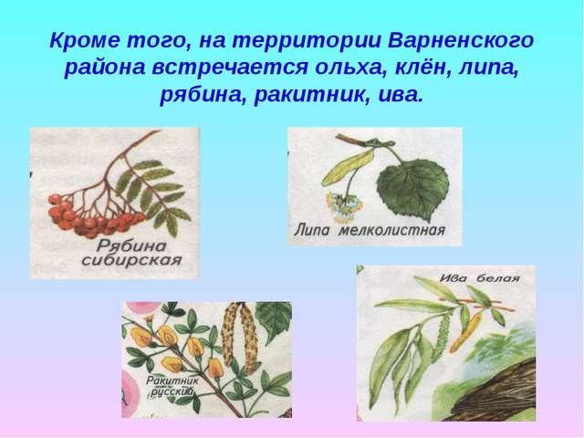 Кроме того, на территории Варненского района встречается ольха, клён, липа, р...