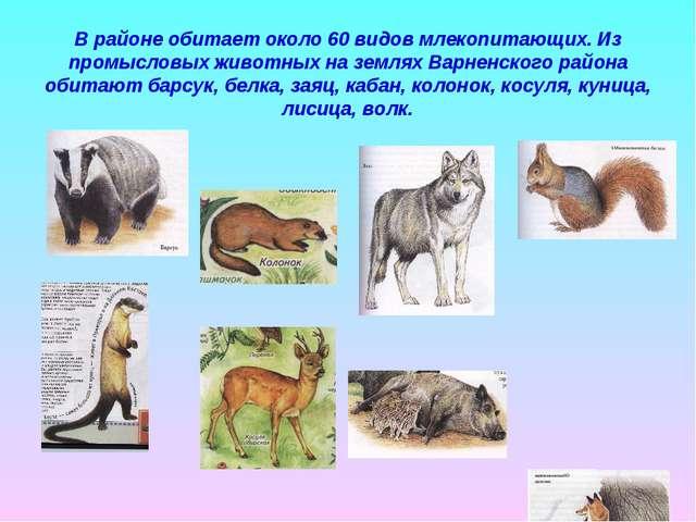 В районе обитает около 60 видов млекопитающих. Из промысловых животных на зем...
