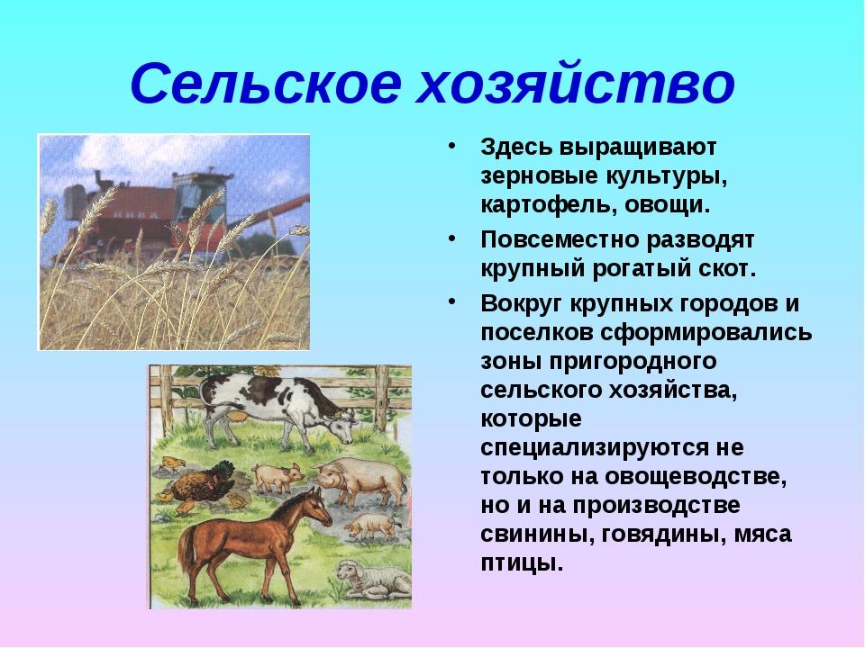 Сельское хозяйство Здесь выращивают зерновые культуры, картофель, овощи. Повс...