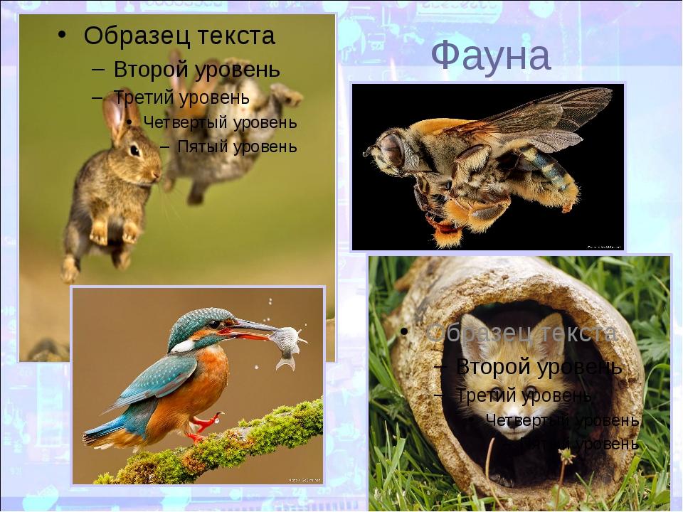 Фауна