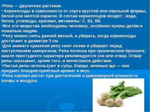 Репа — двулетнее растение. Корнеплоды в зависимости от сорта круглой или овал