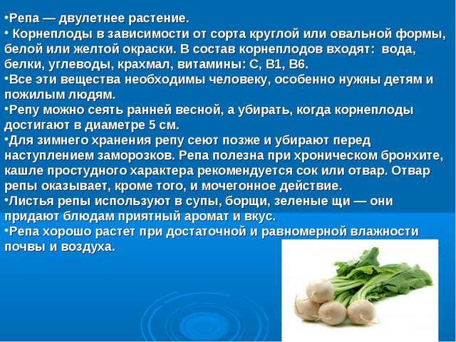 Репа — двулетнее растение. Корнеплоды в зависимости от сорта круглой или овал...