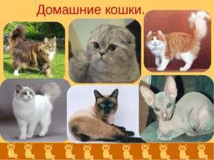Домашние кошки.