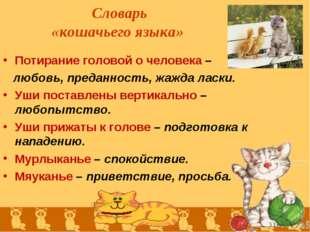 Словарь «кошачьего языка» Потирание головой о человека – любовь, преданность