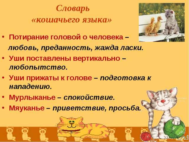 Словарь «кошачьего языка» Потирание головой о человека – любовь, преданность...