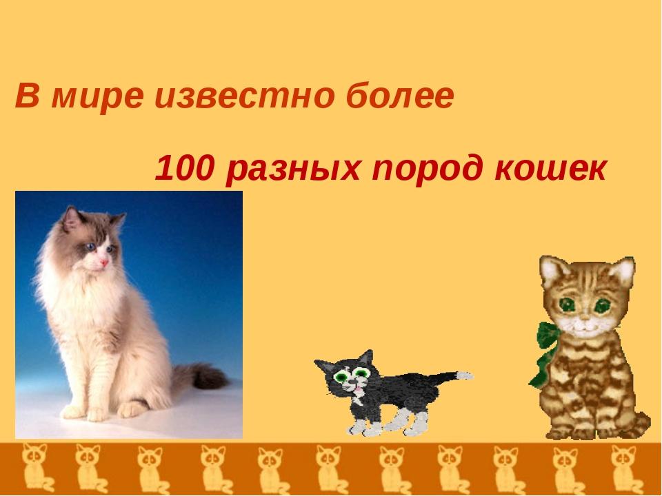 В мире известно более 100 разных пород кошек