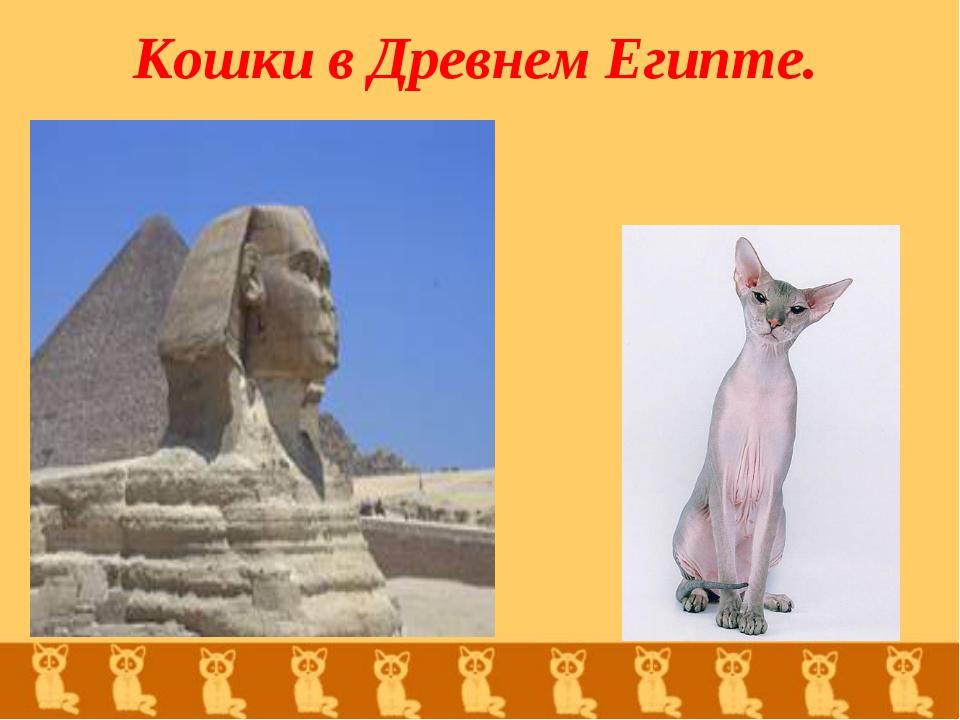 Кошки в Древнем Египте.