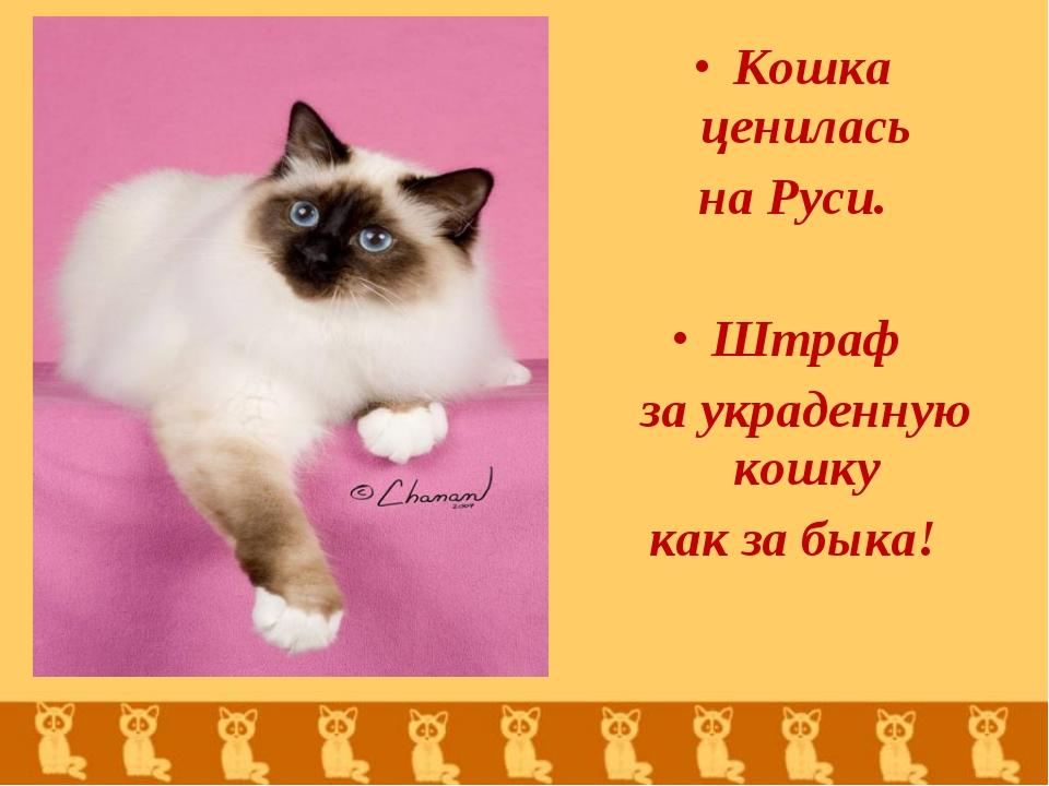 Кошка ценилась на Руси. Штраф за украденную кошку как за быка!