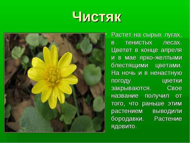 Чистяк Растет на сырых лугах, в тенистых лесах. Цветет в конце апреля и в мае...