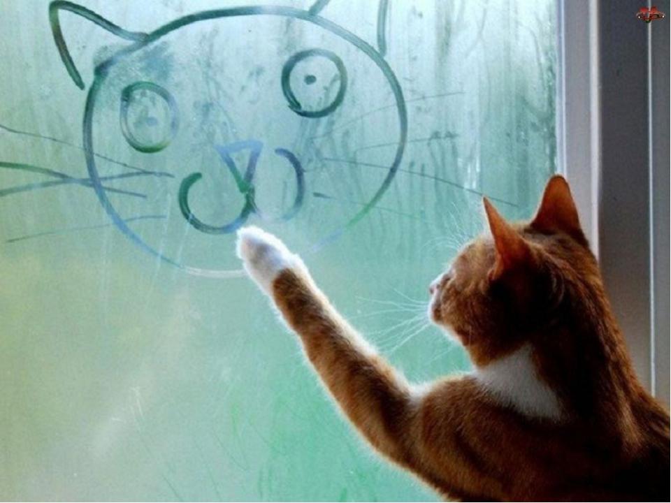 Как сделать чтобы кот был ласковым