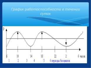 График работоспособности в течении суток