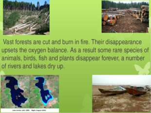 Vast forests are cut and burn in fire. Their disappearance upsets the oxygen