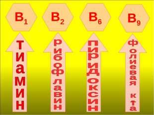 B1 B2 B6 B9